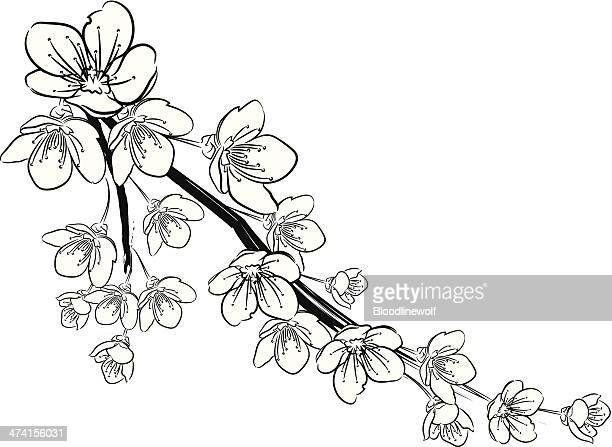 cherry blossoms black and white - cherry blossom stock illustrations, clip art, cartoons, & icons