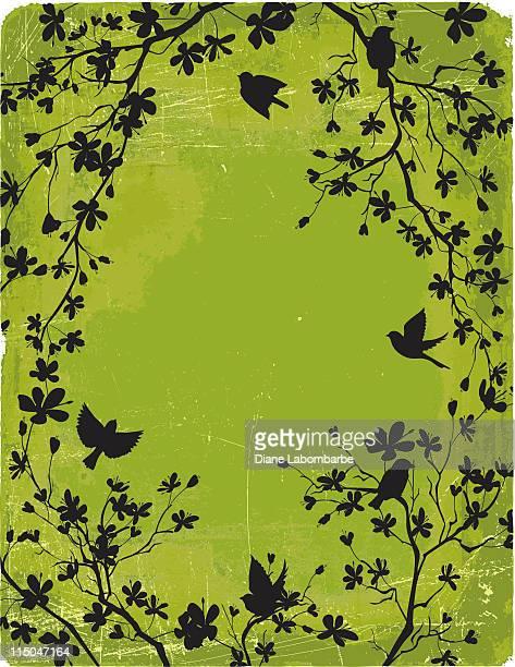 illustrations, cliparts, dessins animés et icônes de cerisiers en fleurs branches & oiseaux de silhouettes sur fond vert - cerisier japonais