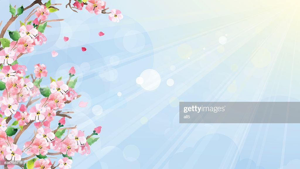 Cherry blossoms, spring background. Vector watercolor technique