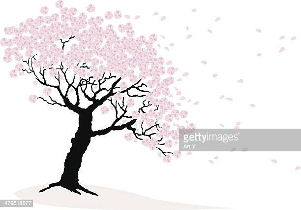 cherry blossoms - flowering trees stock illustrations, clip art, cartoons, & icons