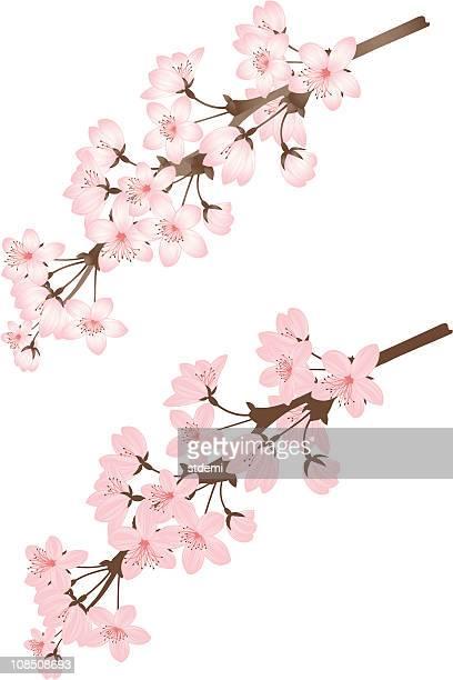 ilustraciones, imágenes clip art, dibujos animados e iconos de stock de de cherry branch - cherry tree