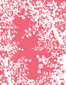 Cherry Branches On Pink