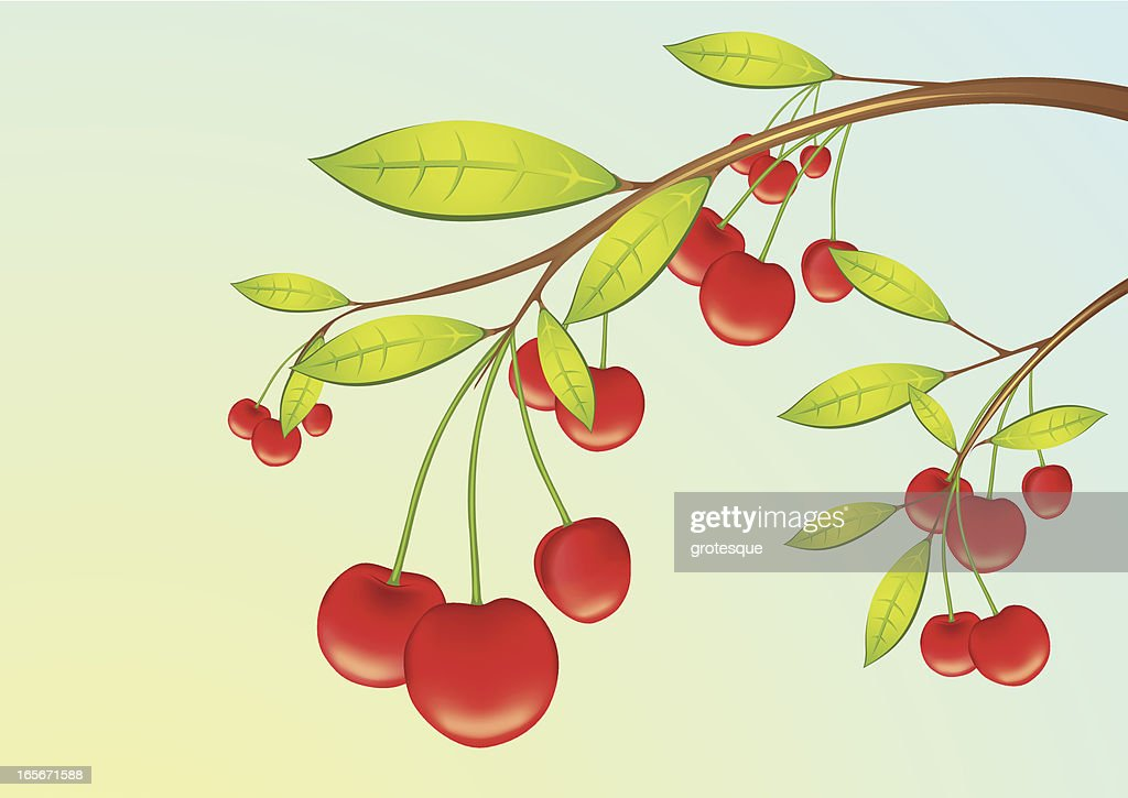 Cherry - Fruits