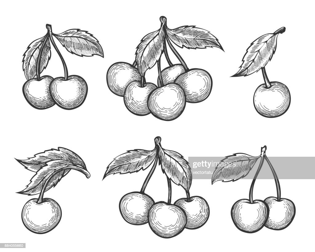 Cherry sketch icons set
