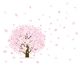 Cherry tree and petal