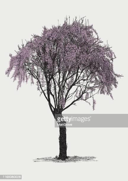 193 Iillustrations Cliparts Dessins Animes Et Icones De Cerisier Japonais Getty Images
