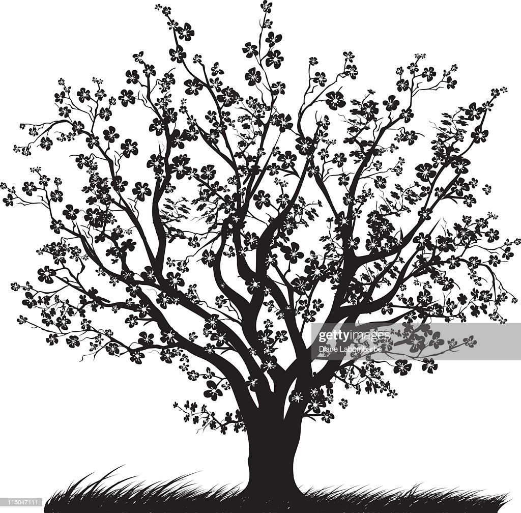 Cherry Tree in Full Bloom with Blossoms Black silhouette : stock illustration
