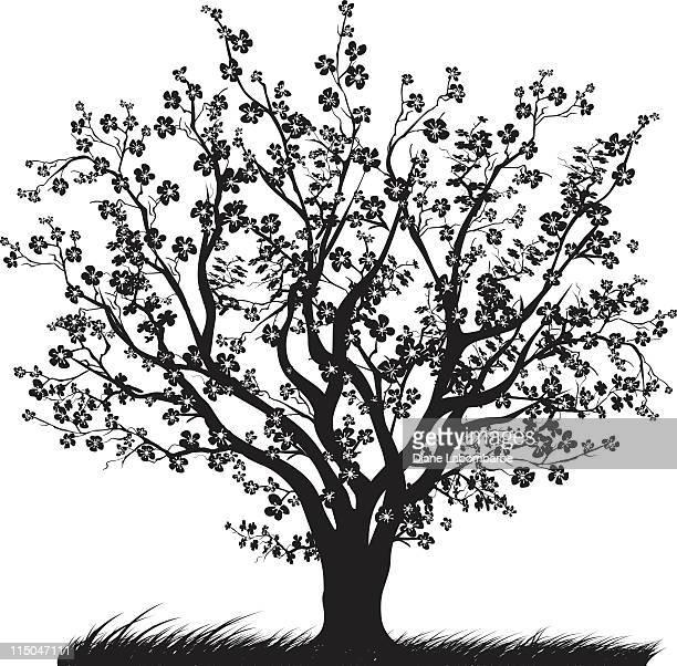 ilustraciones, imágenes clip art, dibujos animados e iconos de stock de cerezo con cerezos en flor en plena floración silueta negra - cherry tree