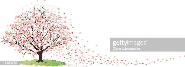 cherry tree in full bloom with blossoms blowing in wind - flowering trees stock illustrations, clip art, cartoons, & icons