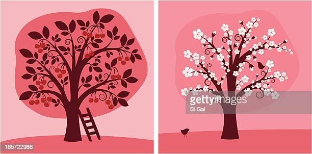 ilustraciones, imágenes clip art, dibujos animados e iconos de stock de cerezo tree - cherry tree