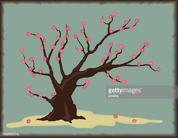 illustrations, cliparts, dessins animés et icônes de cerisier à fleurs - cerisier japonais