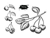 Cherry vector drawing set. Isolated hand drawn berry on white background. Summer