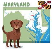 Chesapeake Bay Retriever Maryland