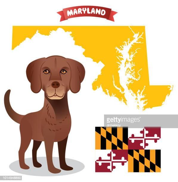 chesapeake bay retriever maryland - chesapeake bay stock illustrations, clip art, cartoons, & icons