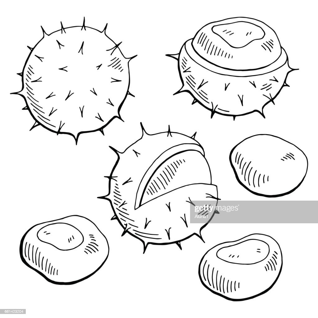 Chestnut nut graphic black white isolated sketch illustration vector