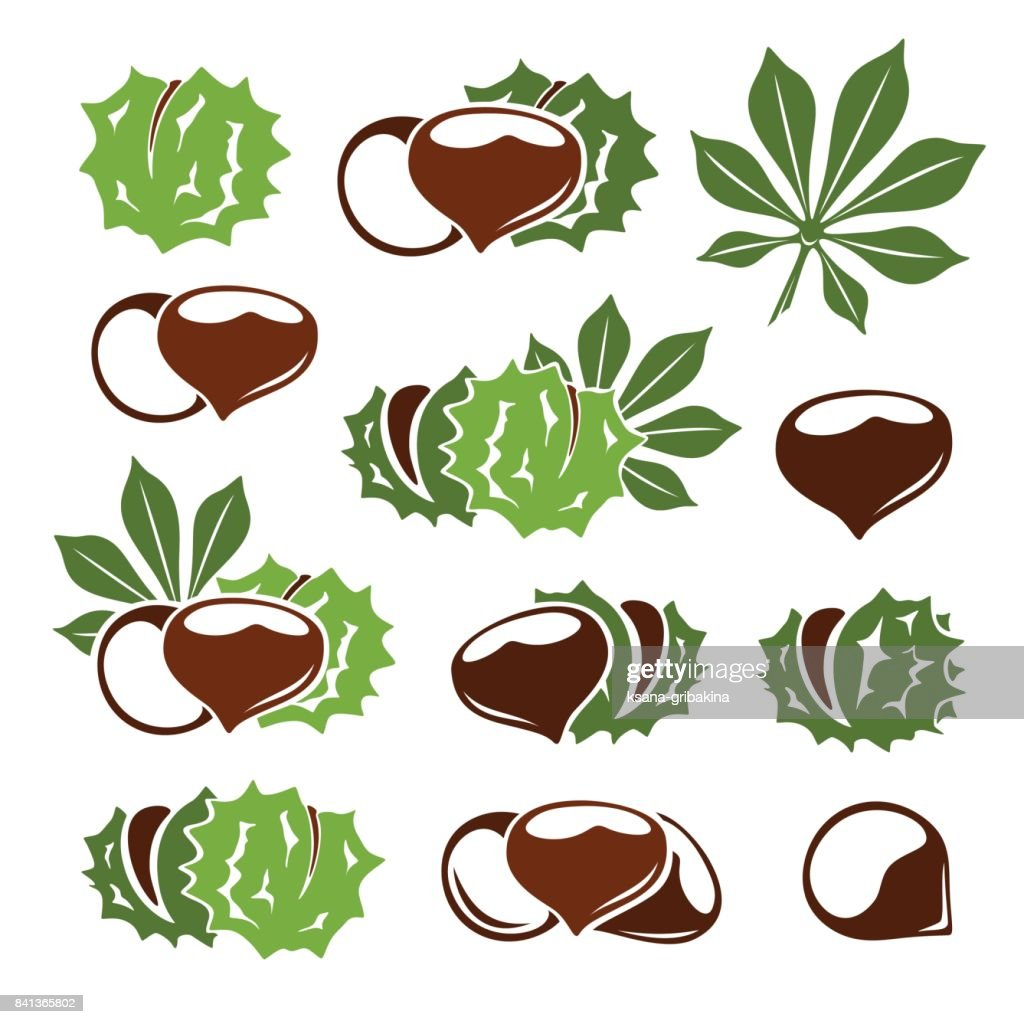 Chestnuts icon collection. Nuts with leaves vector symbols in stencil style.