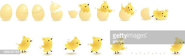 chick - animal egg stock illustrations, clip art, cartoons, & icons