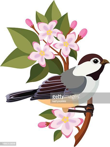 ilustrações, clipart, desenhos animados e ícones de chapim e mayflowers - pilritreiro