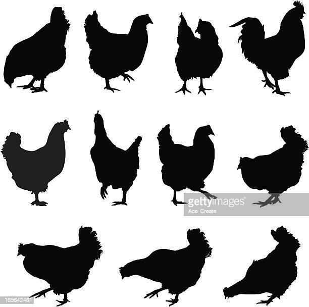 チキンとオスのひな鳥シルエット - named animal点のイラスト素材/クリップアート素材/マンガ素材/アイコン素材