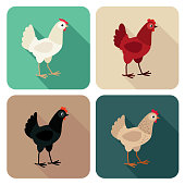 Chicken breeds icon set in flat style with long shadow