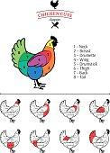 Chicken Cuts Diagram