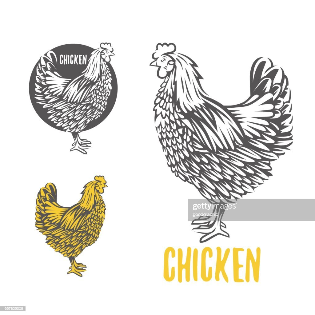 Chicken. illustration, design elements for the chicken manufacturing.