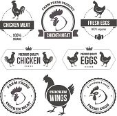 Chicken meat and eggs 1