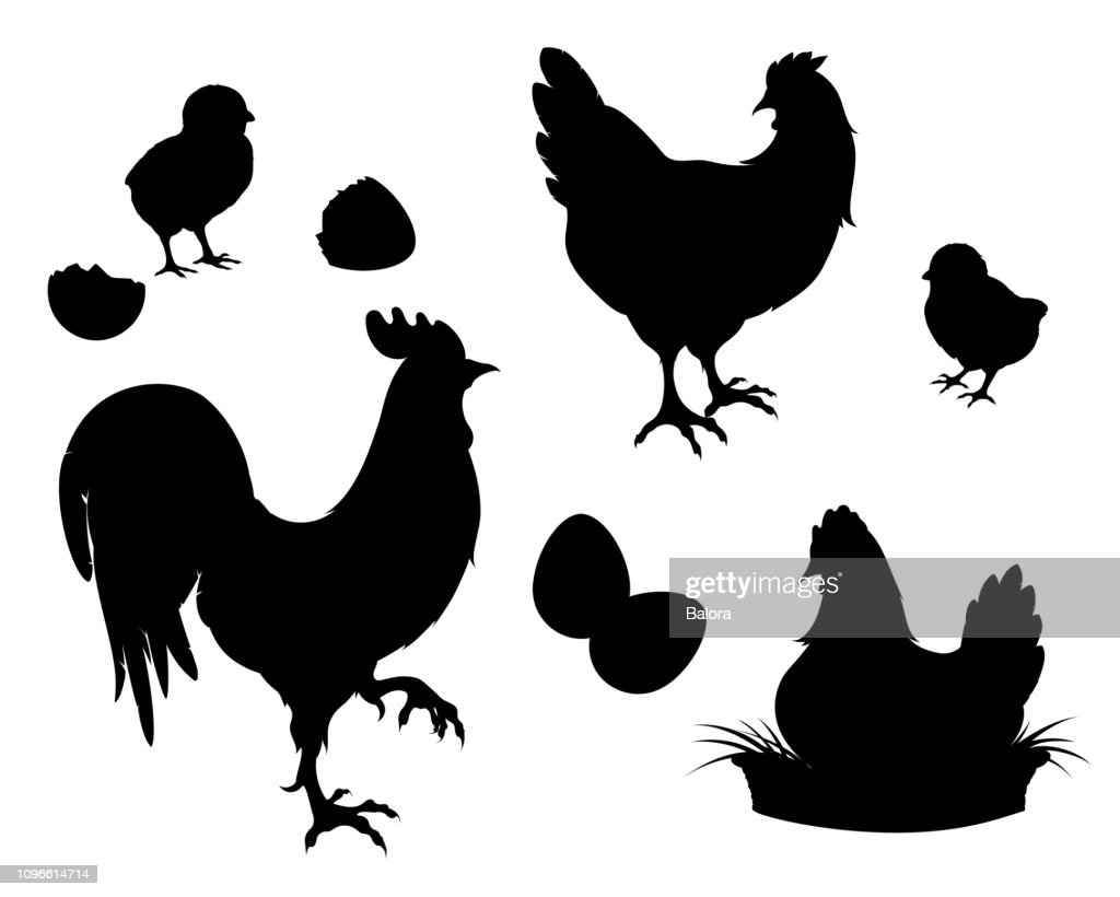Chicken,rooster,Chicks,eggs, black silhouette