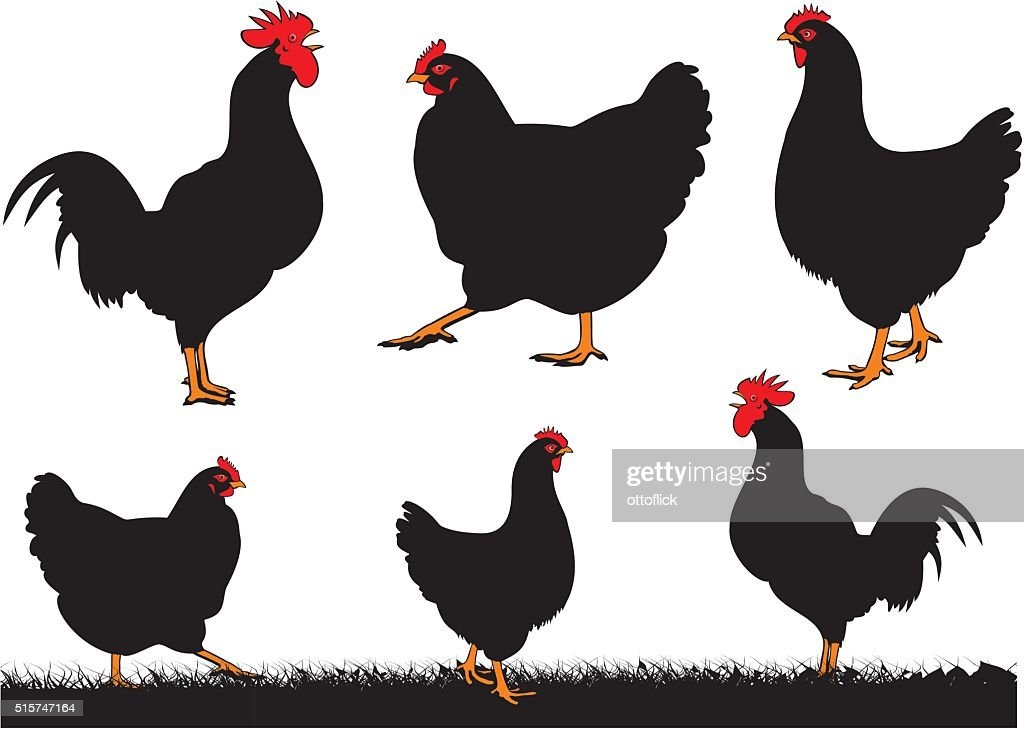 chickens - hen and rooster