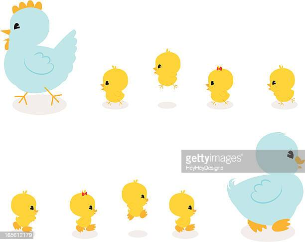Chickies and Duckies!