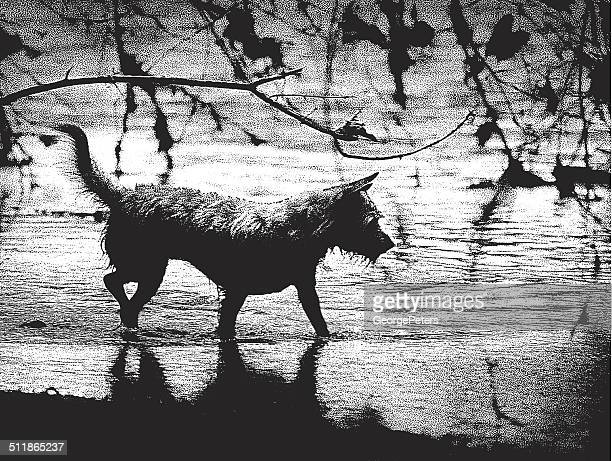 chihuahua terrier mixed breed playing in water - long haired chihuahua stock illustrations, clip art, cartoons, & icons