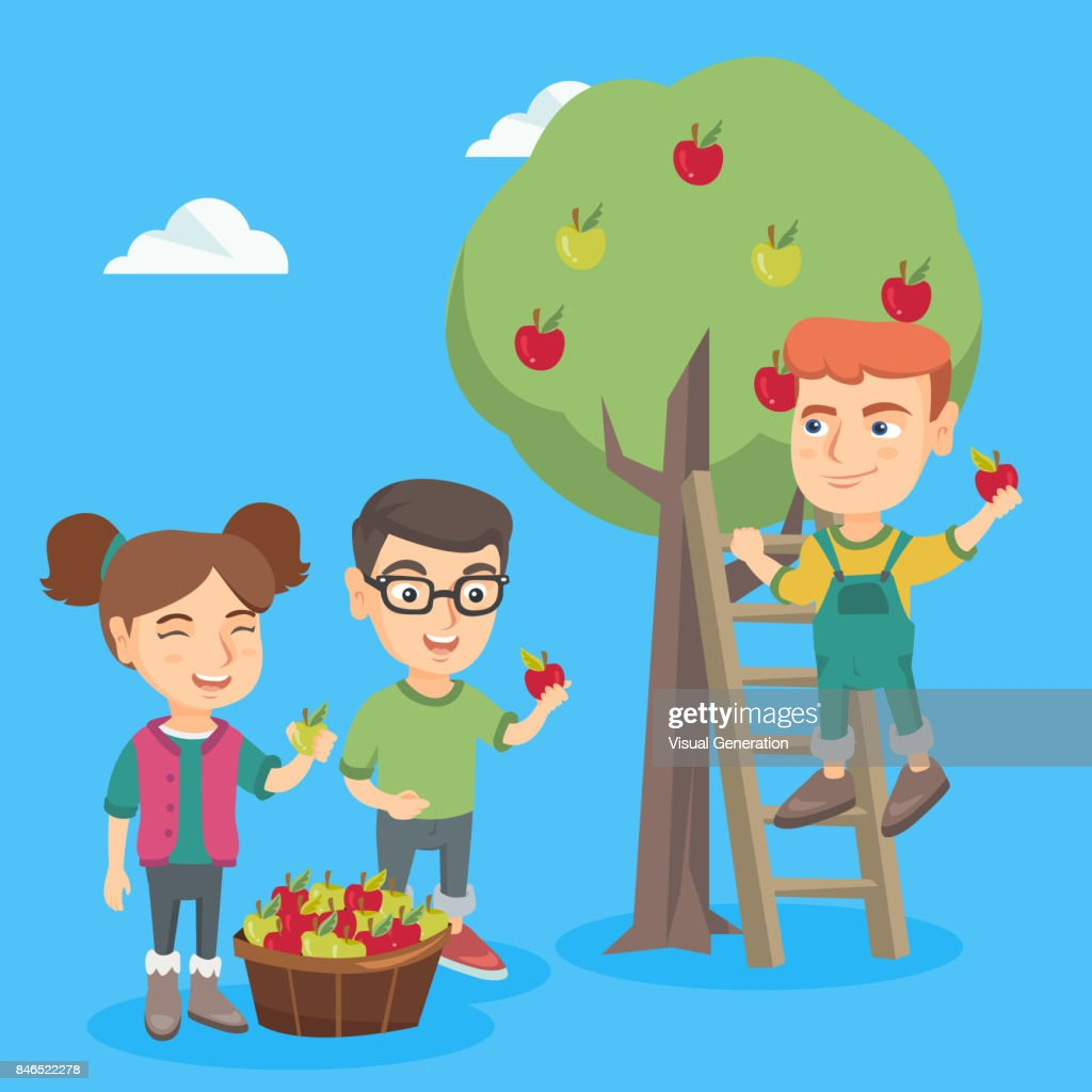 Children harvesting apples in apple orchard