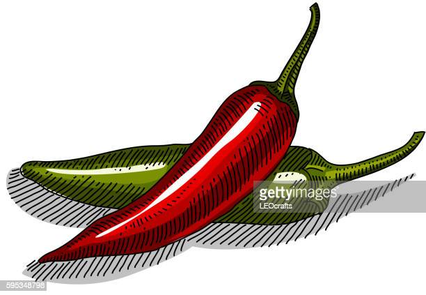chili peppers drawing - chilli pepper stock illustrations