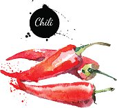 Chilli. Hand drawn watercolor painting on white background. Vect