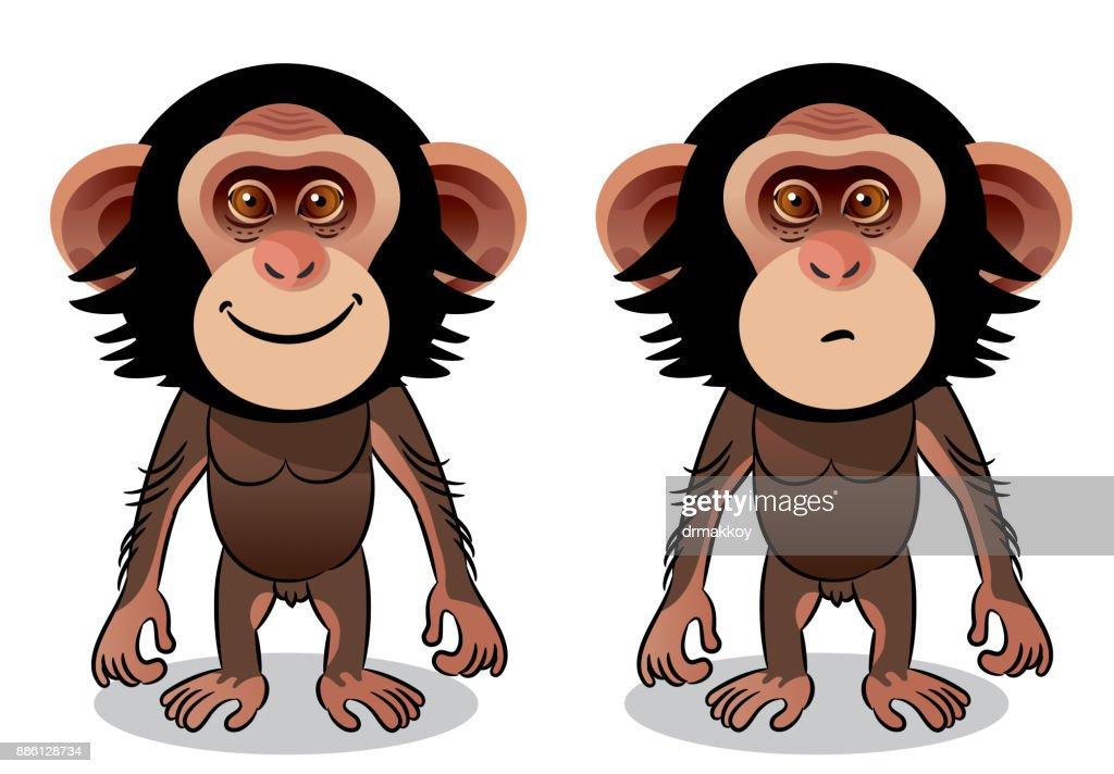 Chimpanzee : stock illustration