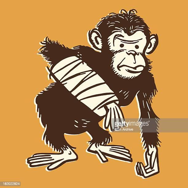 Chimpanzee with a Broken Arm