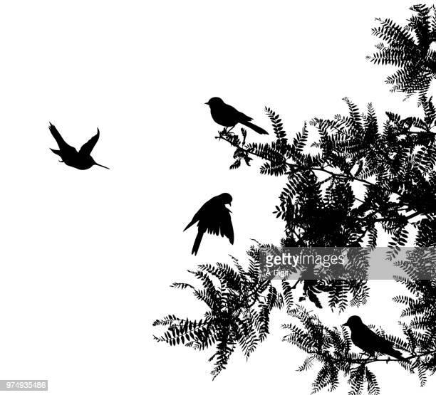 ilustrações de stock, clip art, desenhos animados e ícones de chirpy warbler birds - canto de passarinho
