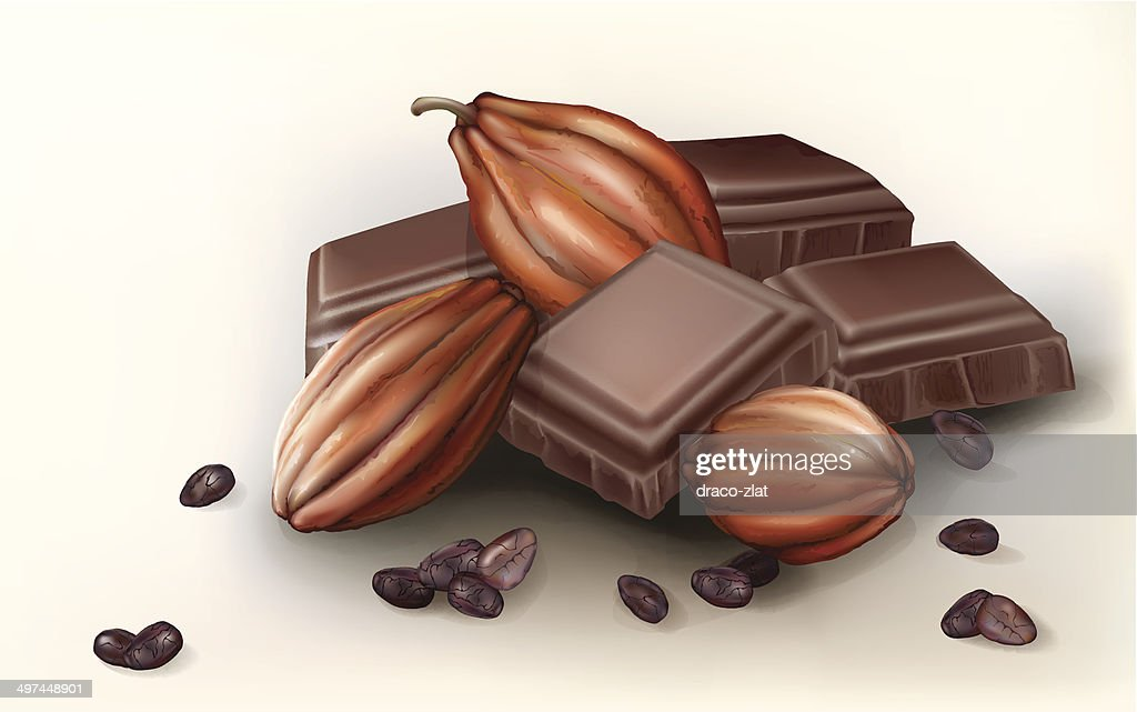 chocolate and cacao fruit