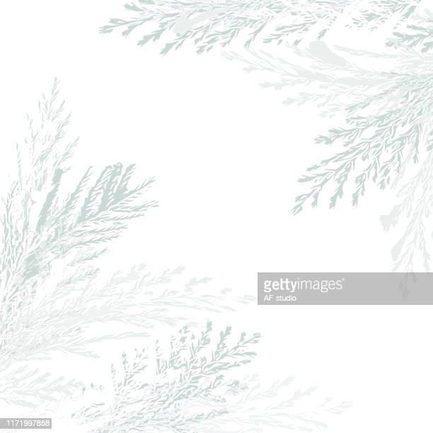 illustrazioni stock, clip art, cartoni animati e icone di tendenza di christmas background - albero sempreverde