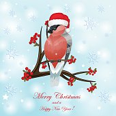 Christmas card with bullfinch and berry over snowflakes bacground