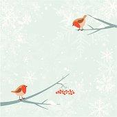 Christmas robin bird