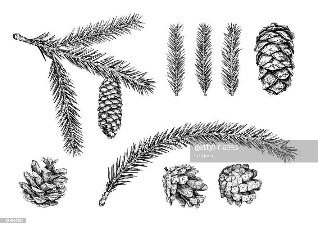 Tannenarten Weihnachtsbaum.Weihnachtsbaum Zweig Skizze Stock Illustration Getty Images