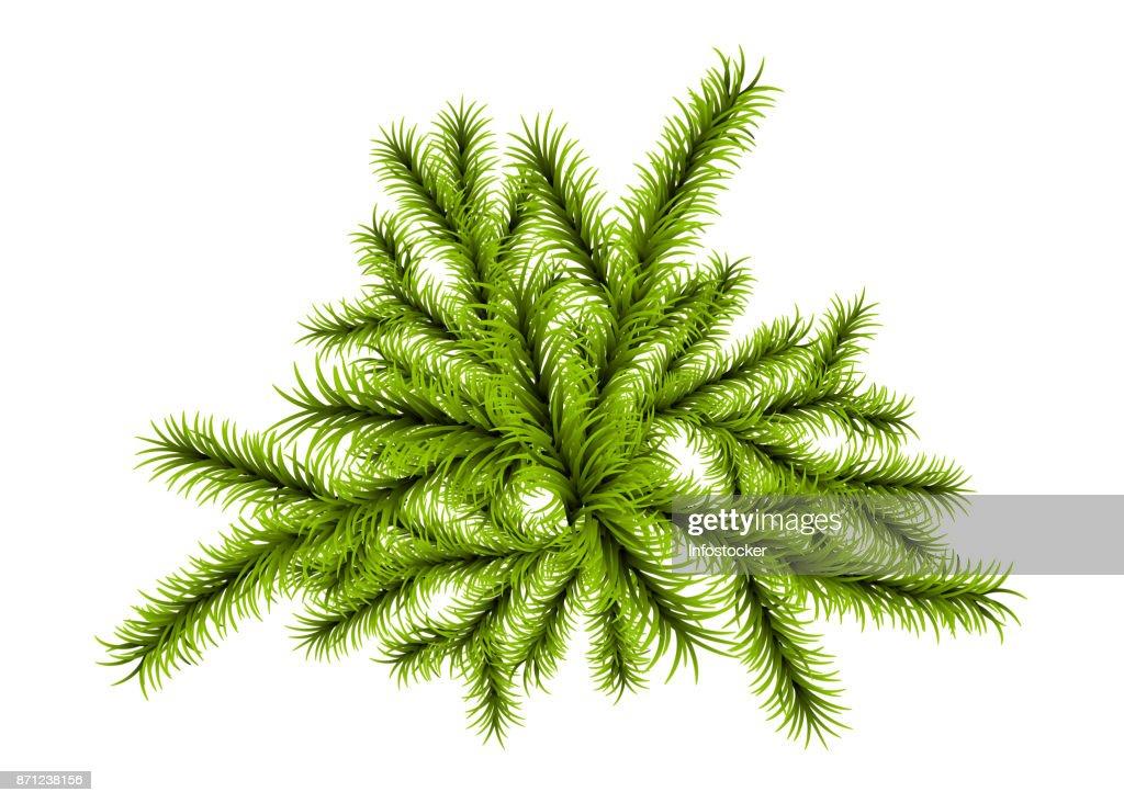 Weihnachtsbaum Zweig Vorlage Vektorgrafik | Getty Images