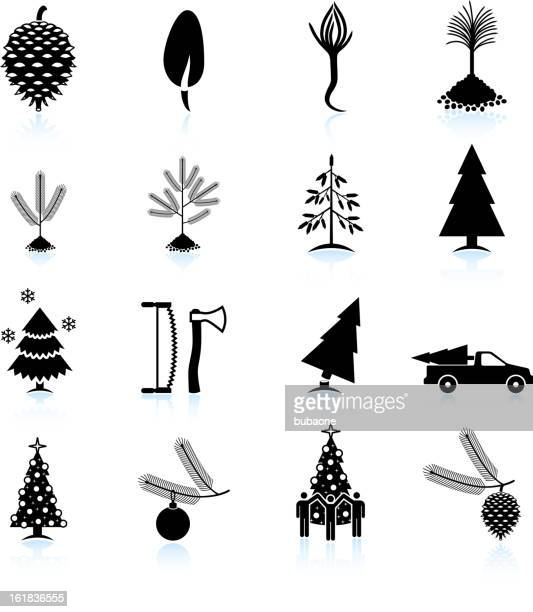 christmas tree growing and chopping down vector icon set - pine cone stock illustrations, clip art, cartoons, & icons
