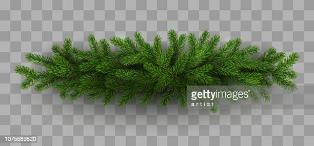 christmas tree - spruce tree stock illustrations