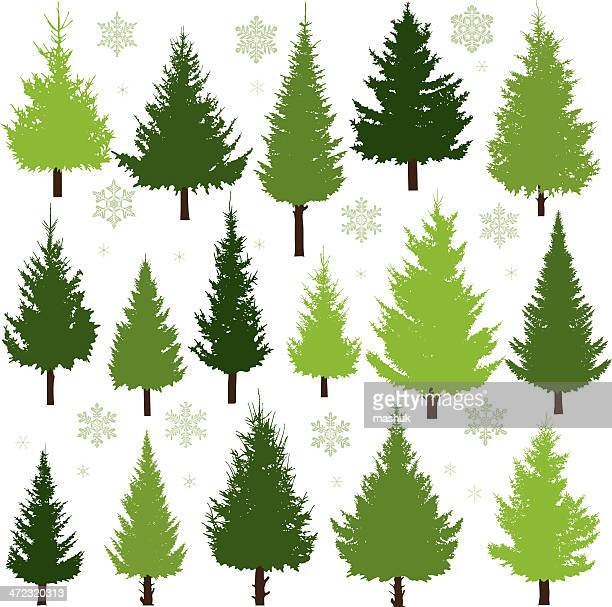 christmas trees - evergreen stock illustrations