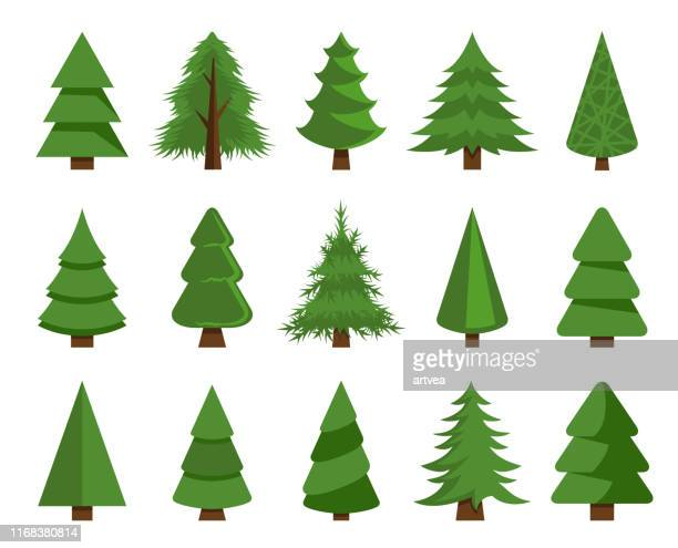 christmas trees vector set stock illustration - evergreen stock illustrations