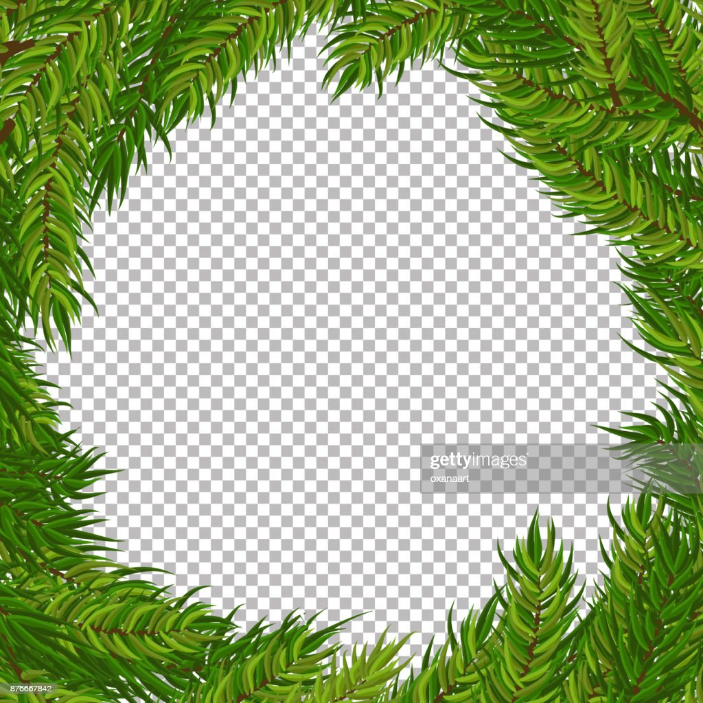 Christmas vector tree decorative frame with transparent background. Realistic pine branches illustration