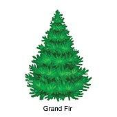 Christmas vector tree like grand fir for New year celebration