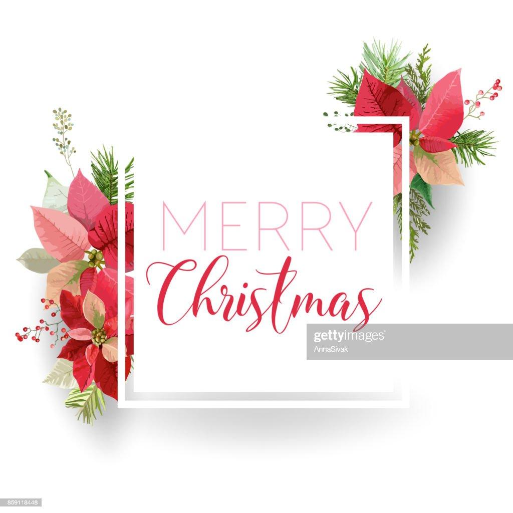 Weihnachten Winter Weihnachtsstern Blume Banner Grafischen ...